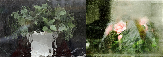 the longings of indoor plants (Manfred Geyer / Ute Kluge)