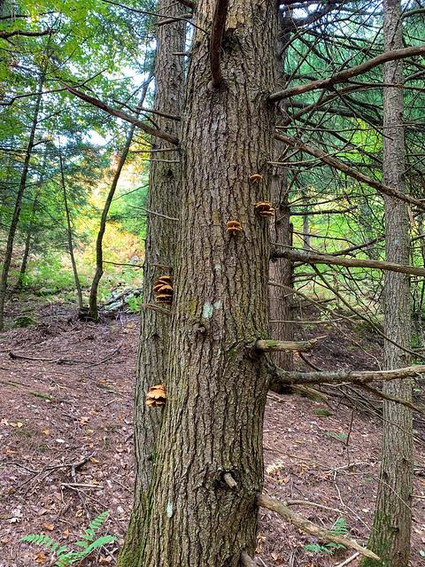 Bill Ballard Trail (Lower): hiking vermont norwich billballardtrail unitedstates
