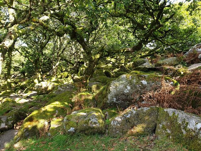 Dartmoor scenes#1 - England 2020