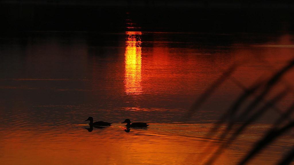 Evening Lake Shore Walking