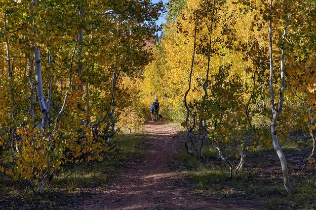 Autumn Hike - 92420--850_1991_7868-craw1-TPZDN