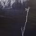winter at Harris Lake in infrared 13