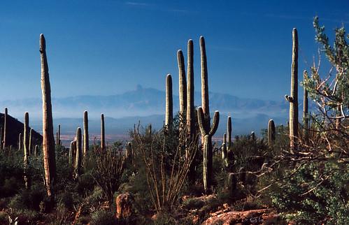 Saguaro National Monument 1988 (3)
