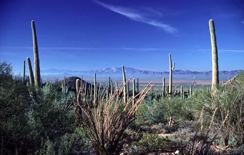 Saguaro National Monument 1988 (1)