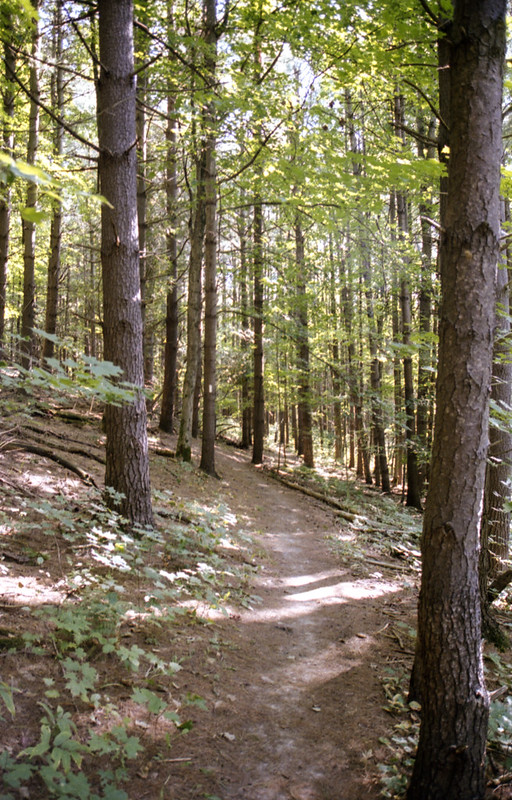 Bruce Trail In the Trees_