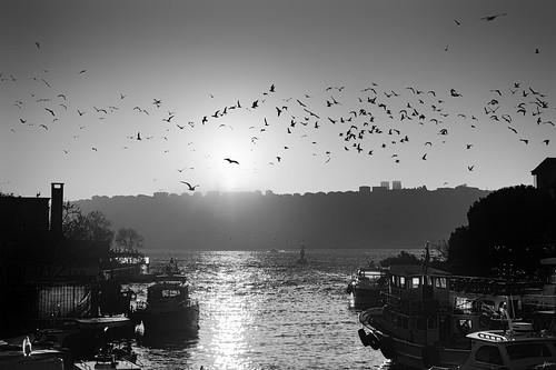 Serenade of Seagulls