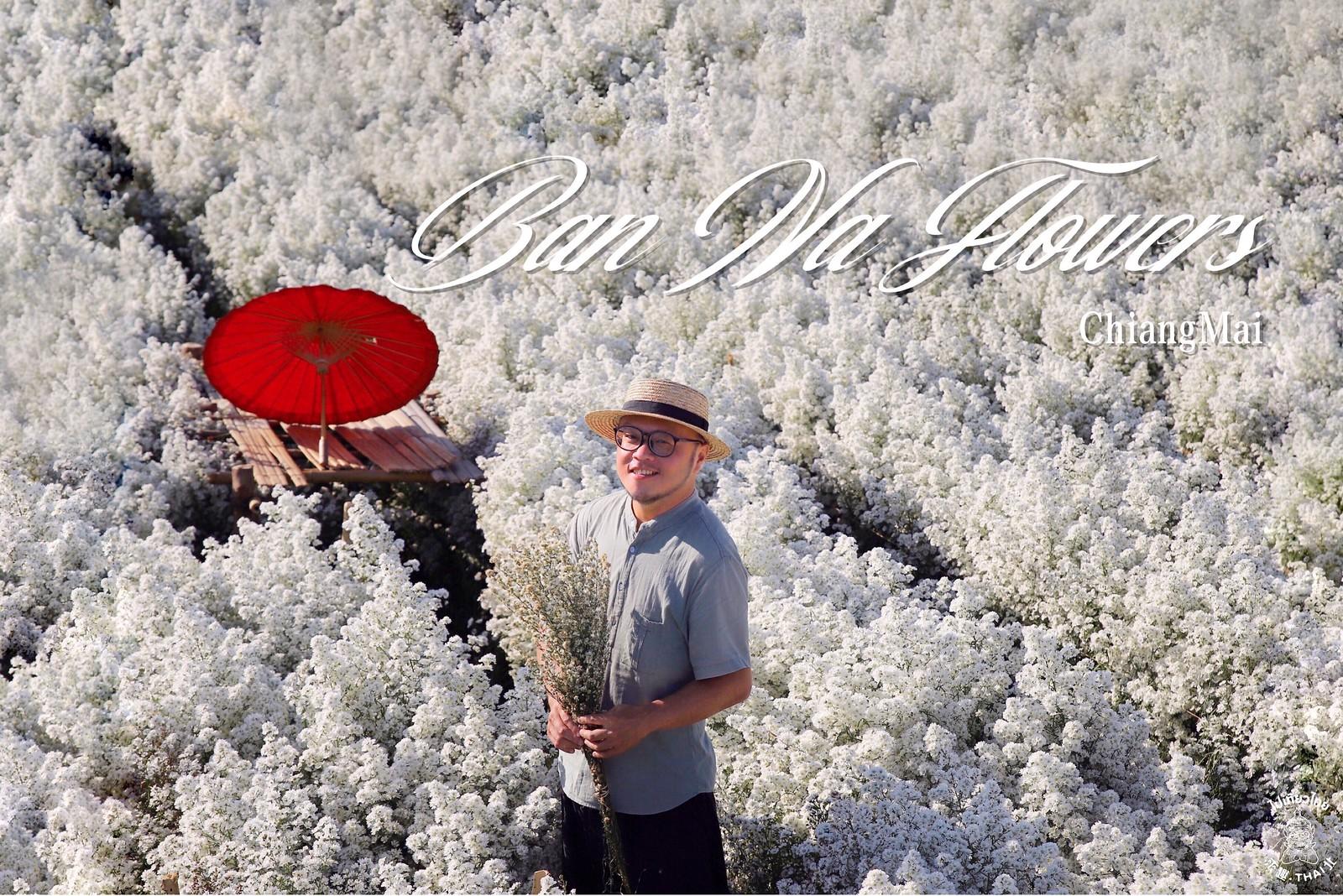 如夢境般的白色花海《สวนดอกไม้บ้านนาฟลาวเวอร์ & Ban Na Flowers》