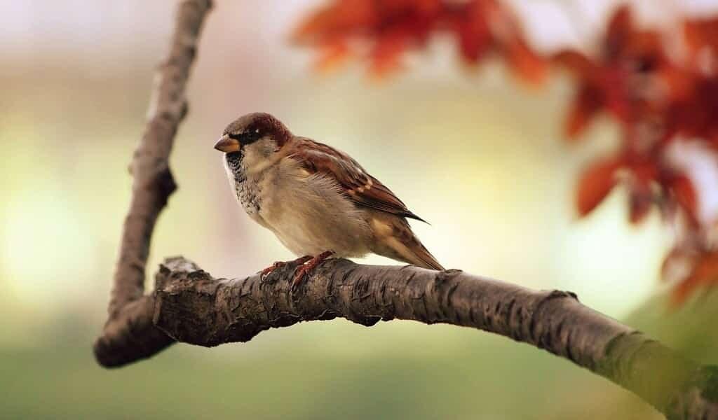 le-confinement-a-changé-la-façon-dont-les-oiseaux-chantent