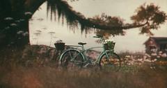 noveny-floral-bike-fabfree-gift