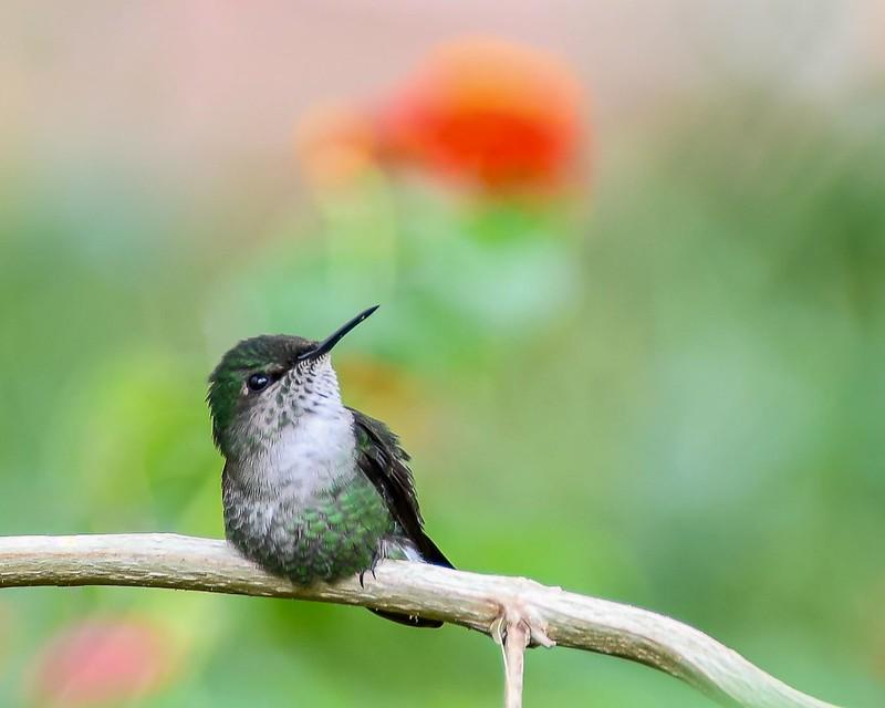 Club photo de Boisbriand_Le petit oiseau de toutes les couleurs_Linda Forget