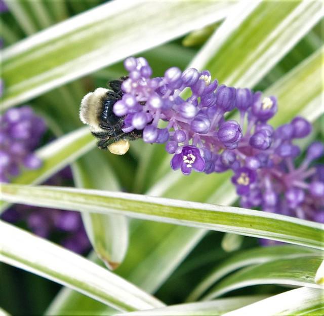 Graceland Bees