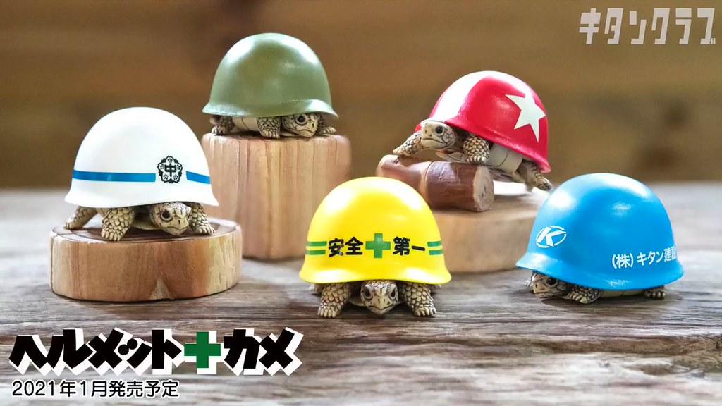 防護再升級!奇譚俱樂部「安全帽+烏龜」趣味轉蛋 縮入殼內就安全第一啦~