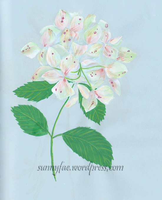 white hydrangea painted with gouache