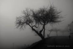 Día de niebla en los Miradores