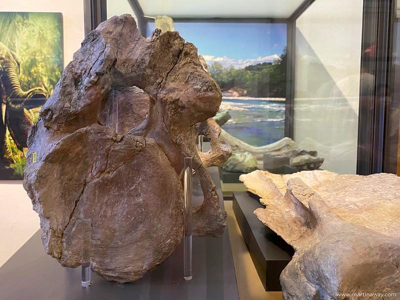 """Museo archeologico e di scienze naturali """"Federico Eusebio"""""""