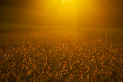 monday fall gold golden sunset beautiful nature evening peace peaceful quiet calm calming tranquil canon 2020 amazing landscape field farm hay