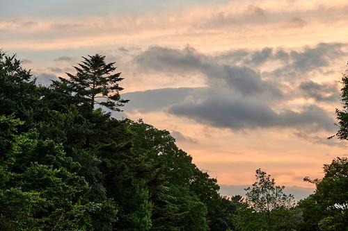 evening dusk sunset colors clouds sky woods nature 夜 夕暮れ 色彩 雲 空 森 自然 shakujiipark tokyo japan 石神井公園 東京