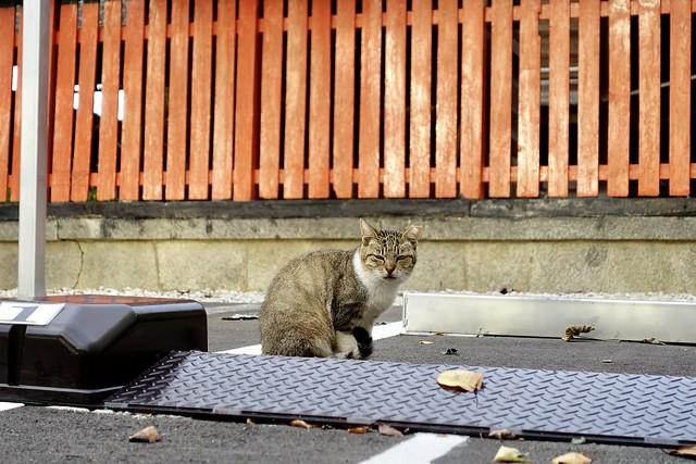 Today's Cat@2020ー09ー28