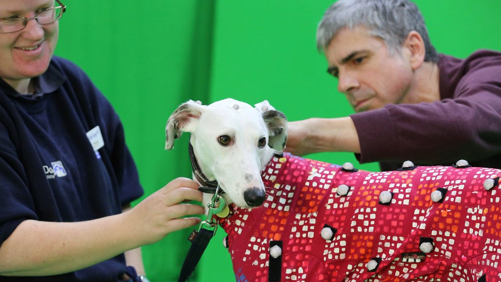 Researcher fitting a motion capture suit on a dog