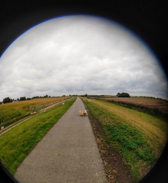Maasdijk Bokhoven