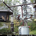 Fall bird feeding in my yard, via my trail cam