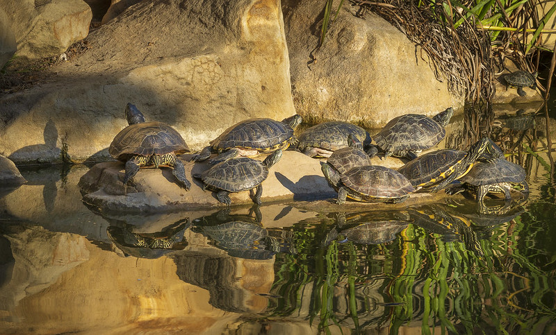 Turtle Soup - by Stephen Sherrill