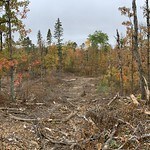 Clearcut with residuals, Beltrami County MN