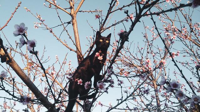Gato 1.1 (Cat 1.1)