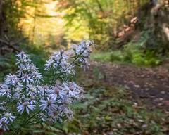 Trail Wildflowers