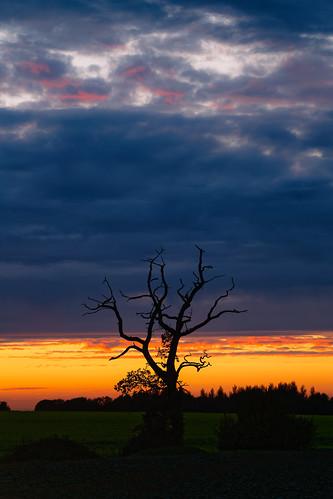 norfolk sunset tree landscape jonathan casey photography nikon d850 sigma art 135mm