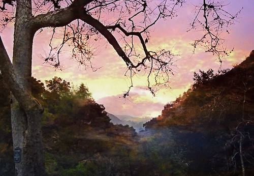 alumrockpark sanjose bayarea sanfranciscobayarea sunset forest park landscape tree california ca mist sky usa