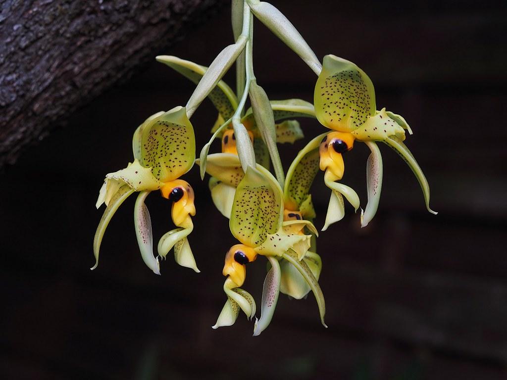 orchids 28 9 2020 037