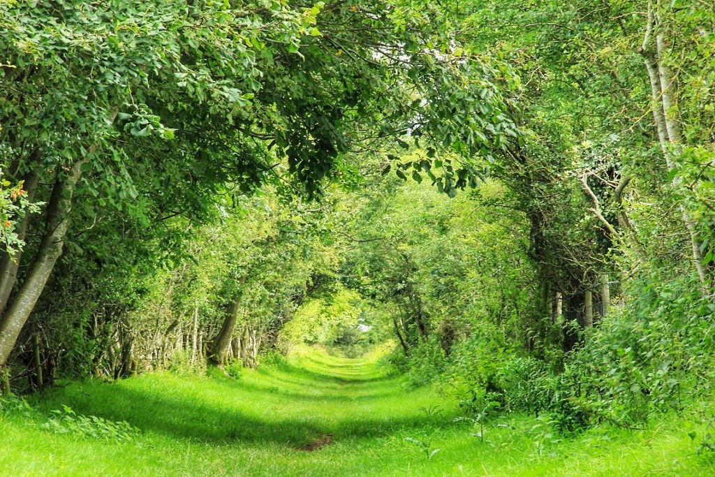 Tunnel of Trees, Hadrian's Wall Path between Carlisle and Walton