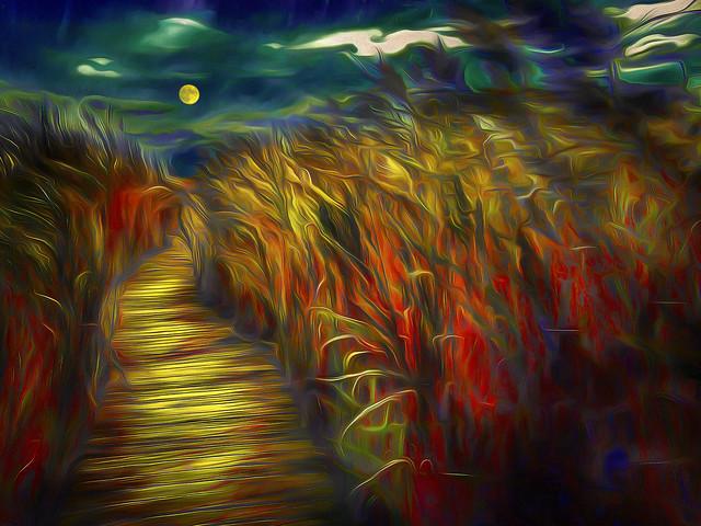 Moonlit Marsh Walk