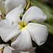 """<p><a href=""""https://www.flickr.com/people/simplyangle/"""">Simply Angle</a> posted a photo:</p>  <p><a href=""""https://www.flickr.com/photos/simplyangle/50395638633/"""" title=""""DSC02798""""><img src=""""https://live.staticflickr.com/65535/50395638633_38636d6e0f_m.jpg"""" width=""""240"""" height=""""160"""" alt=""""DSC02798"""" /></a></p>"""