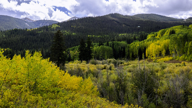 Golden Splendor at Crested Butte, Colorado