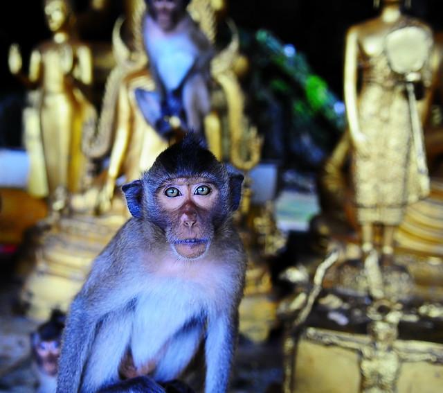 ,, Spirit Cave, Monkey Temple ,,