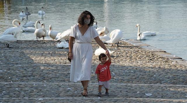 Among swans