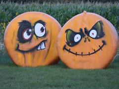 Sandy Bottom Pumpkins 2