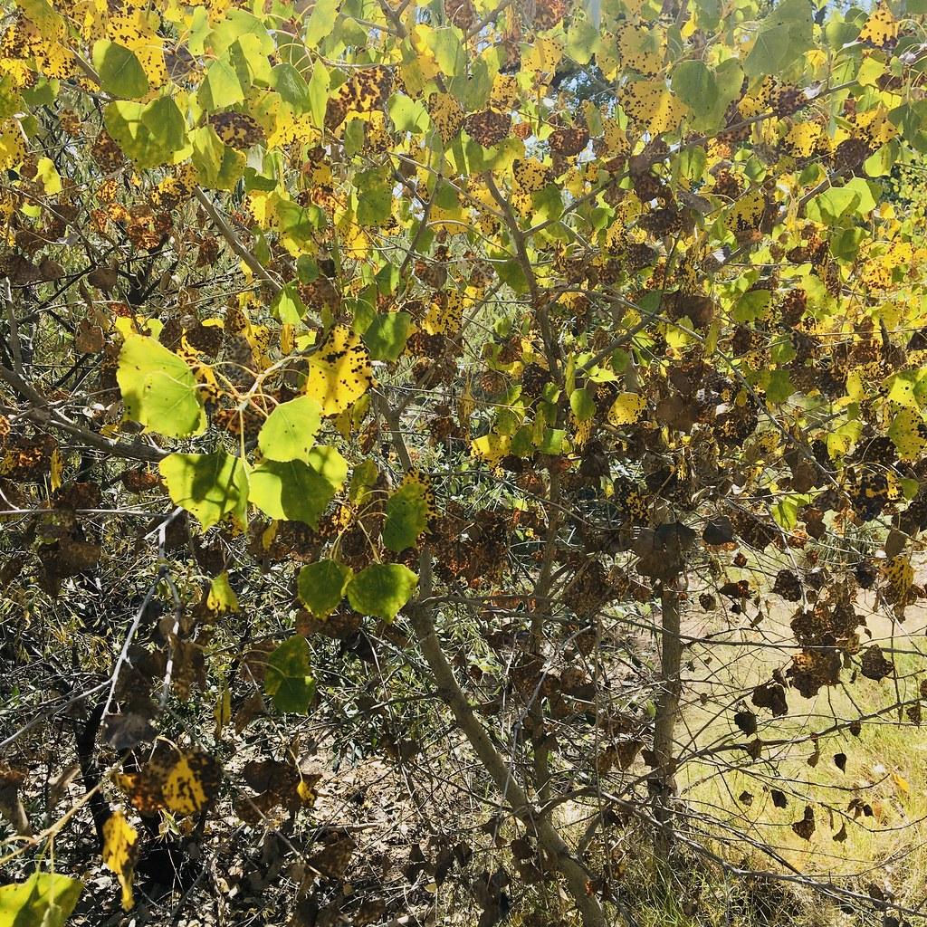 Rio Grande Autumn Color