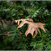 studiotheia posted a photo:Olympus digital camera