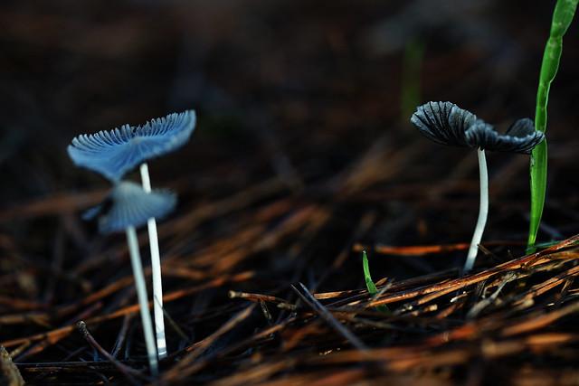 Mushrooms (Macro)