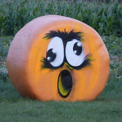 Sandy Bottom Pumpkin surprise
