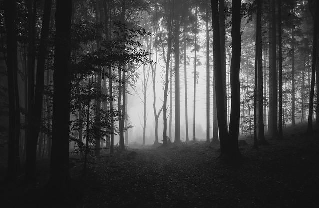 Dark autumn mood