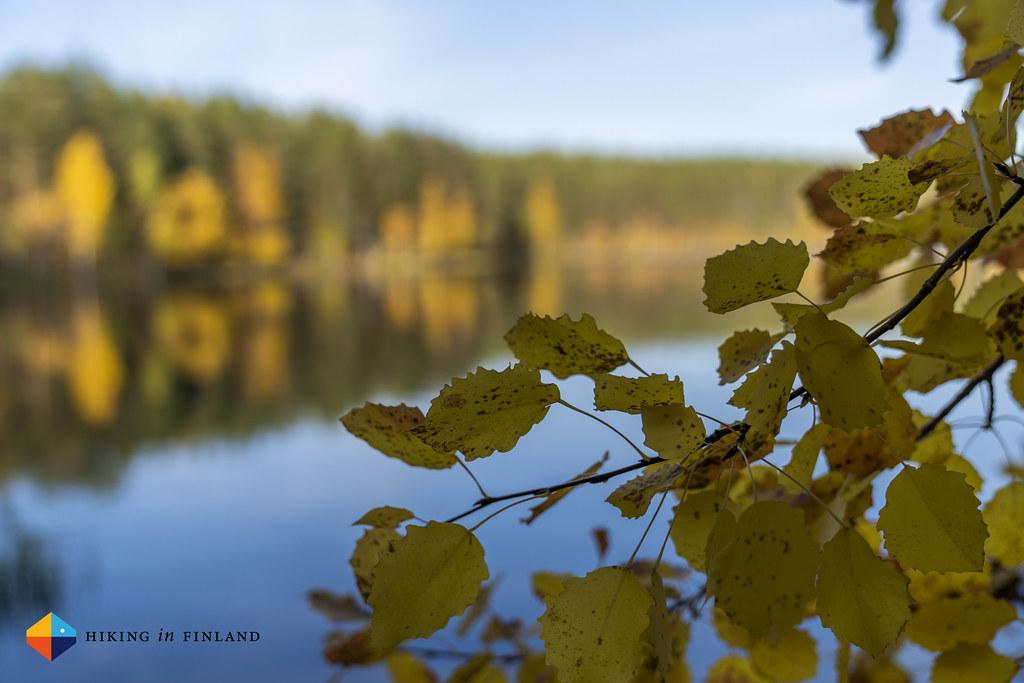 Autumn colours in Rokua GeoPark 3