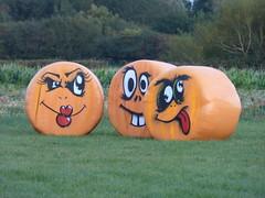 Sandy Bottom Pumpkins