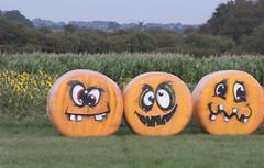 Sandy Bottom Pumpkins 3