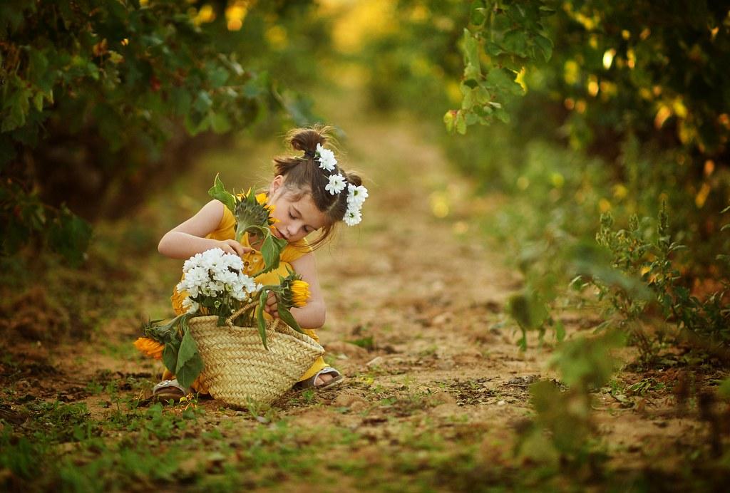 Dream between vineyards