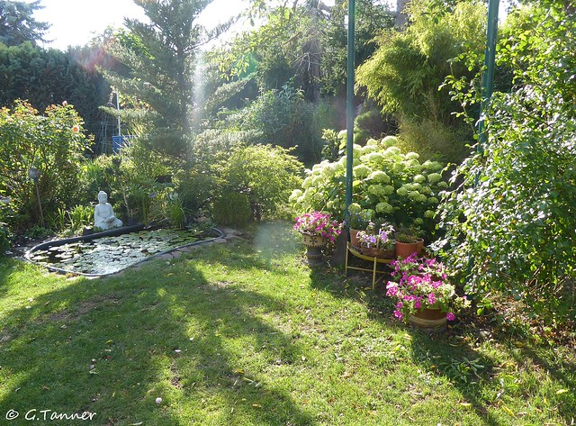Garten September 2020