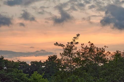 evening dusk sunset colors clouds sky woods nature 夜 夕暮れ 色彩 雲 森 自然 空 shakujiipark tokyo japan 石神井公園 東京